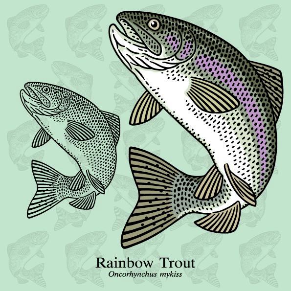 ryby mrożone - pstrąg tęczowy