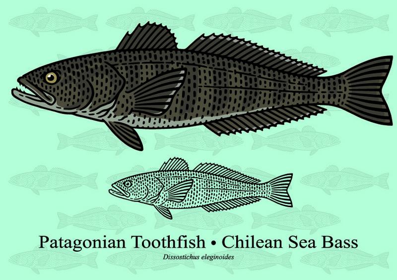 ryby mrożone - antar