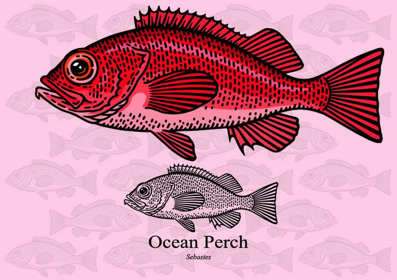 ryby mrożone - karmazyn atlantycki